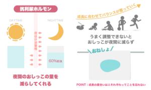 抗利尿ホルモンは夜間に多く分泌され、昼に作られる量の60%前後夜間の尿の量を減らしてくれます。成長とともに分泌バランスが整い成長とともにおねしょが減っていく